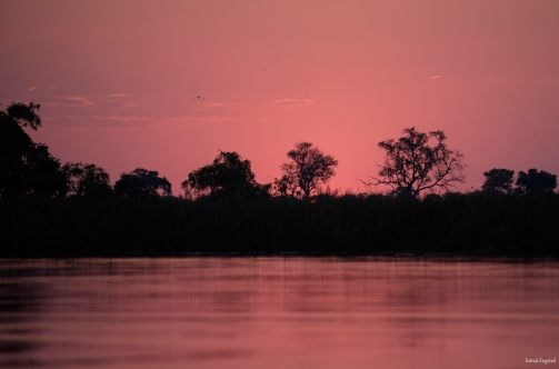 Pink colours on the sky after the sun has set, Okavonga Delta.