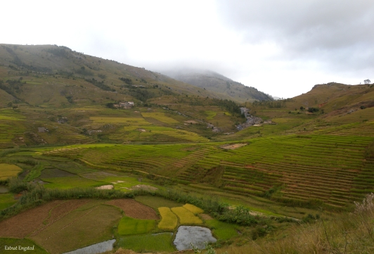 Scenery of agricultural fields on the way between Fiananrantsoa and Manakara, Madagascar.