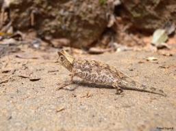 A tiny chameleon we saw inside Ranomafana National Park, Madagascar.